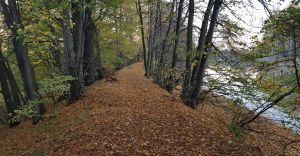 [ZDJĘCIA] Jesienny spacer nad stawami w Goczałkowicach-Zdroju