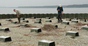 [WIDEO, FOTO] Sukces lęgowy na ptasiej wyspie na J. Goczałkowickim