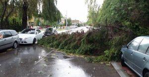 Burza nad Czechowicami - uszkodzone drzewa i pojazdy